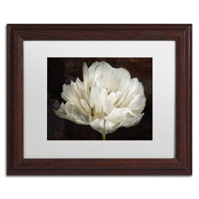 picture of Double White Tulip by Cora Niele Framed Photographic Print